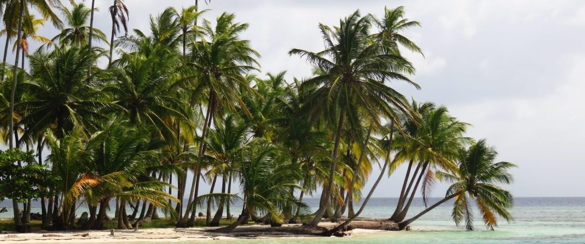 Palm Trees on islands of San Blas Islands Panama; Panama Travel Blog Inspirations
