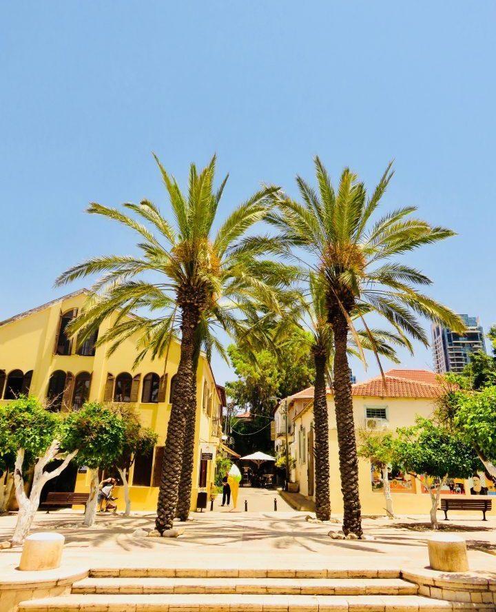 Palms at the old town for blog in Tel Aviv Israel; Tel Aviv City Trip Travel Blog Inspirations