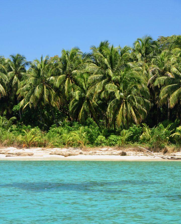 Blue water Palm Trees on Bocas del Toro Panama; Panama Travel Blog Inspirations