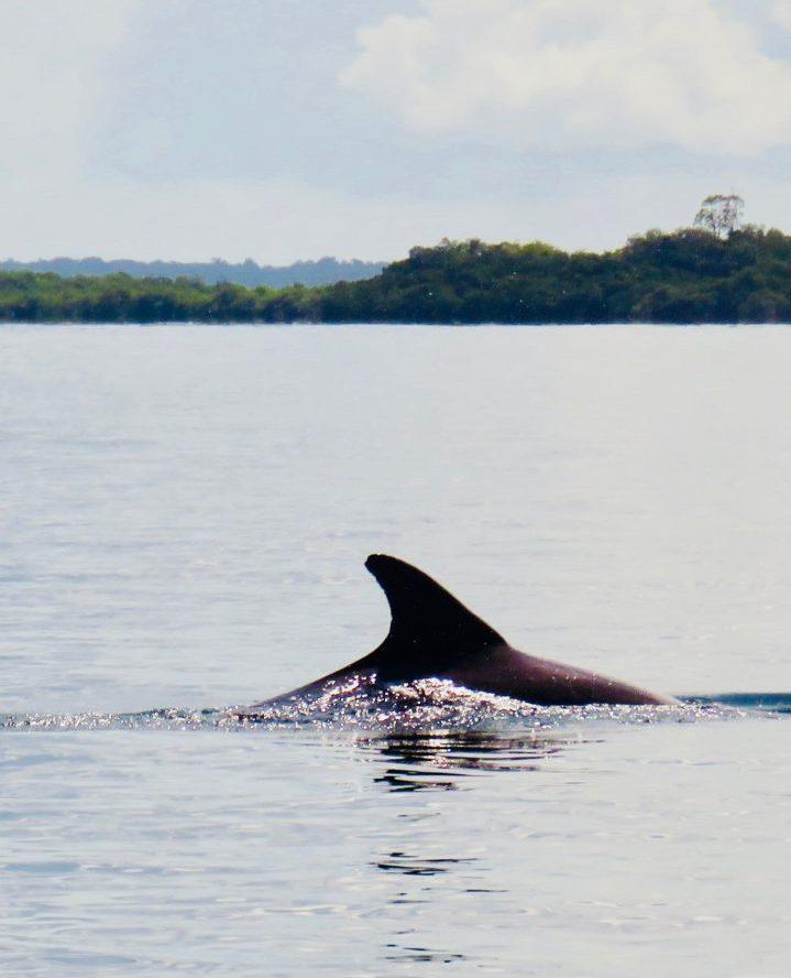 Spotting Dolphins on Bocas del Toro Panama; Panama Travel Blog Inspirations