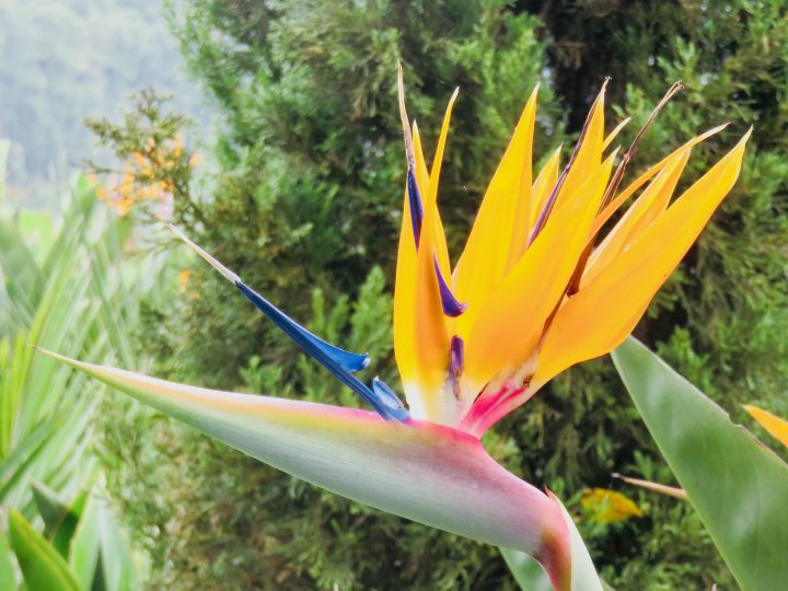 Typical Colombian Flower in Salento Colombia; Colombia Travel Blog Inspirations