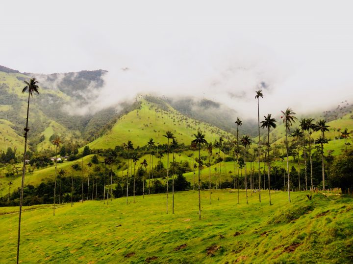 Green Valle de Cocora near Salento Colombia; Colombia Travel Blog Inspirations