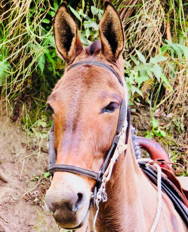 Horse in Valle de Cocora near Salento Colombia; Colombia Travel Blog Inspirations