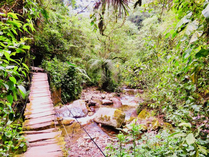 Jungle path Valle de Cocora near Salento Colombia; Colombia Travel Blog Inspirations