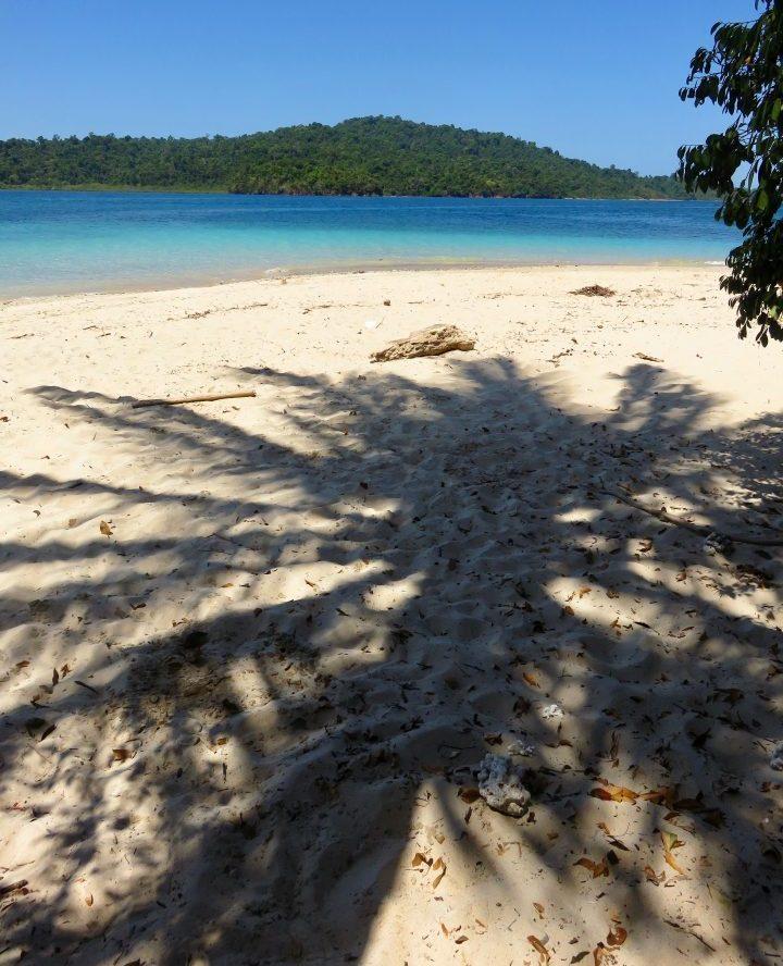 Palm tree on Coiba tour in Santa Catalina Panama; Panama Travel Blog Inspirations