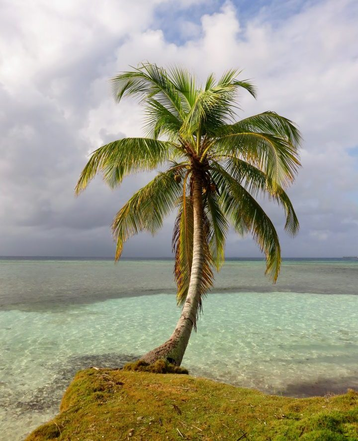 Palm Tree at San Blas Islands Panama; Panama Travel Blog Inspirations