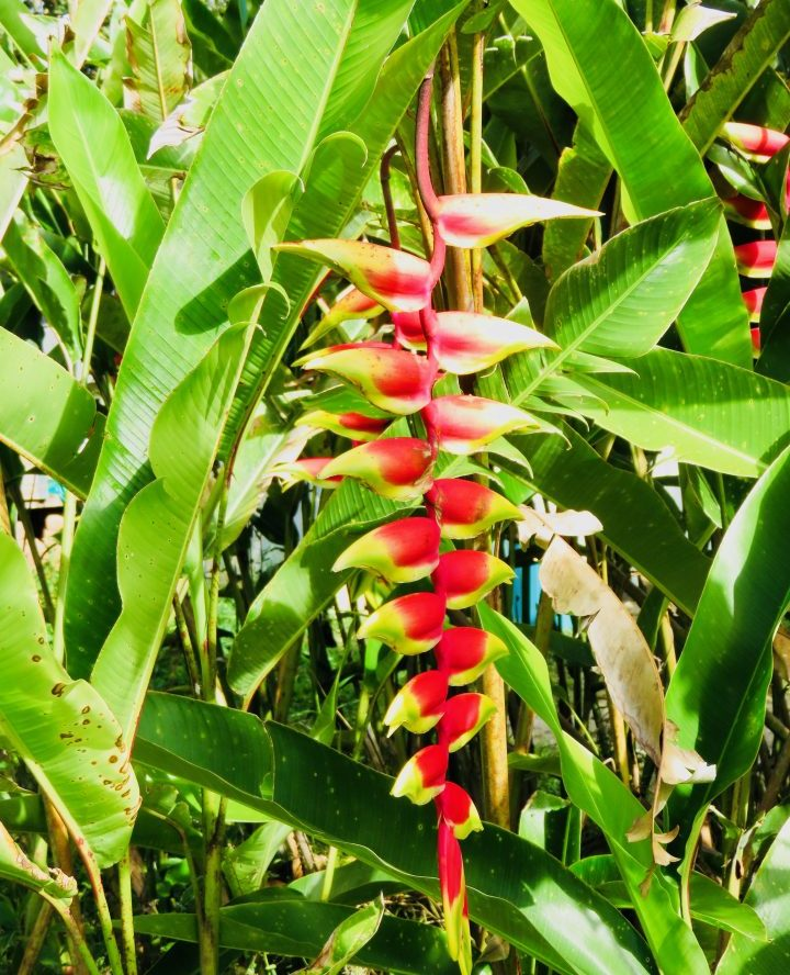 Tropical Flower San Agustin Colombia; Colombia Travel Blog Inspirations