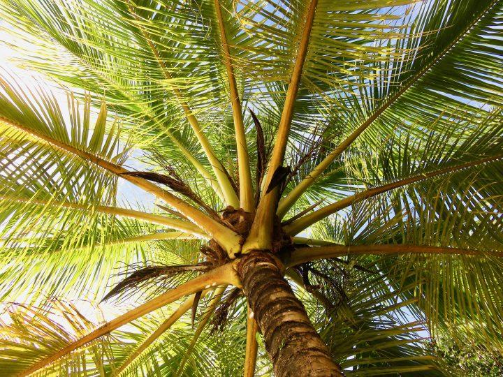 Walk to Starfish beach on Bocas del Toro Panama; Panama Travel Blog Inspirations
