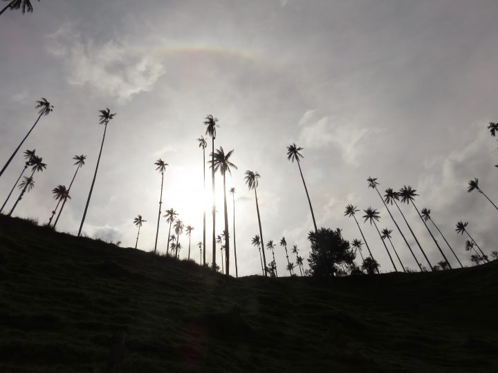 Wax palms valley sun behind clouds in Valle de Cocora near Salento Colombia; Colombia Travel Blog Inspirations