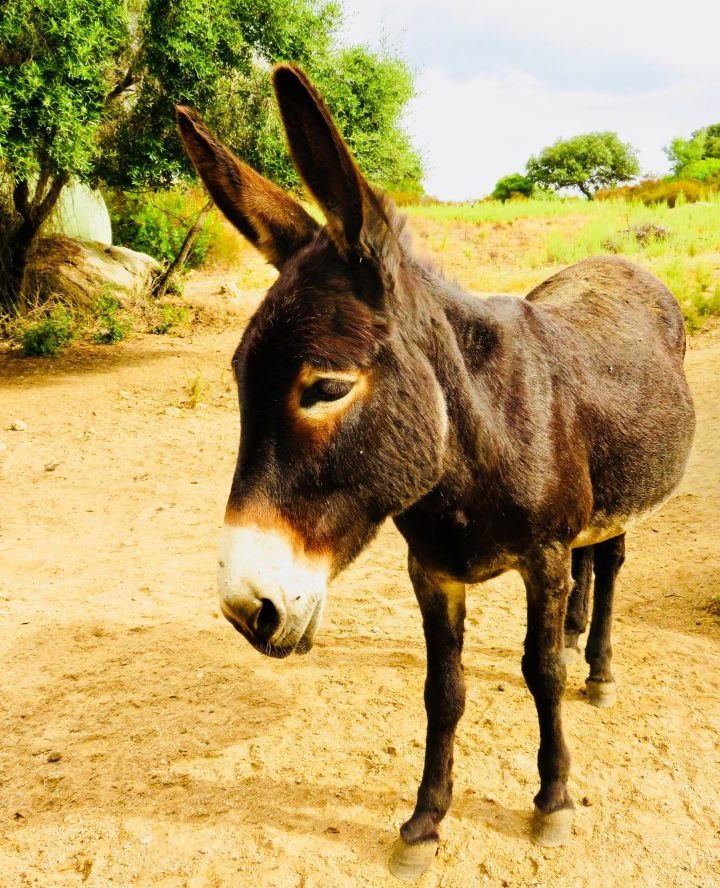 Donkey while traveling in Sardinia, Sardinia Travel Blog Inspirations
