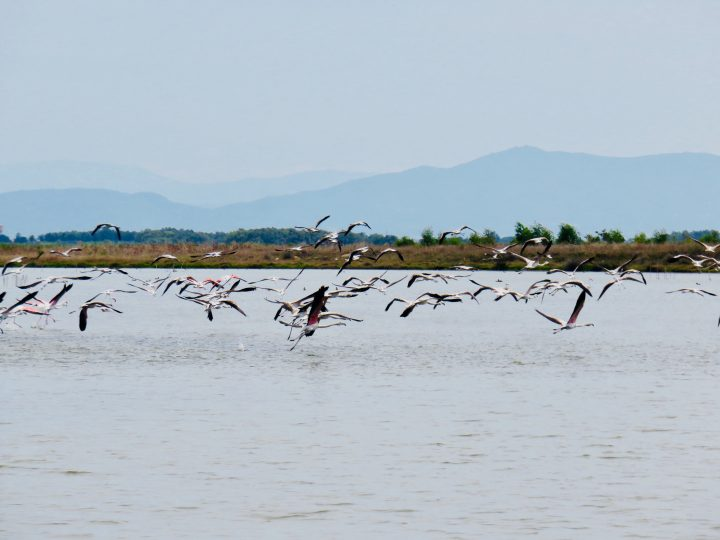 Flying flamingos in West Sardinia, Sardinia Travel Blog Inspirations