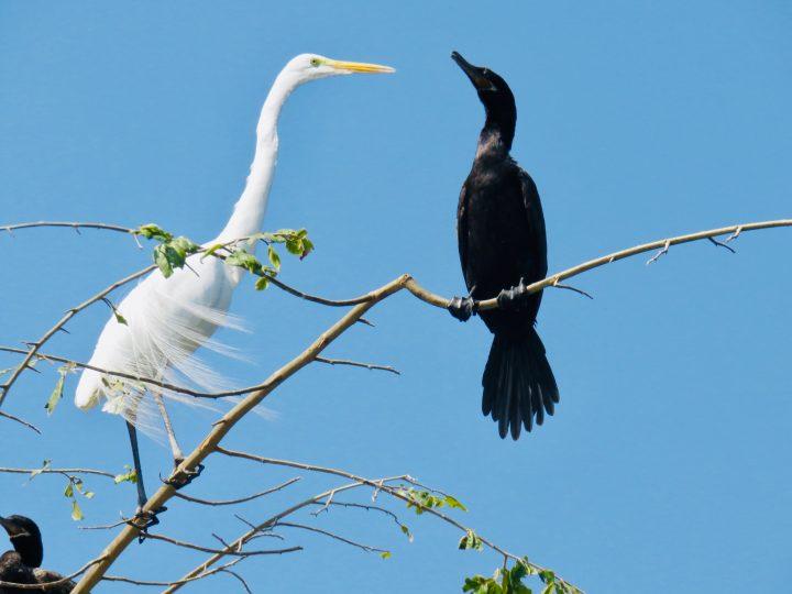 Birds of San Cristobal de Las Casas Mexico, Mexico Travel Blog Inspirations