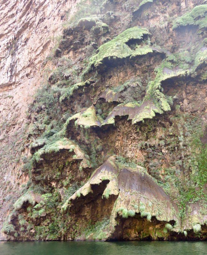 Natural Christmas tree in San Cristobal de Las Casas Mexico, Mexico Travel Blog Inspirations