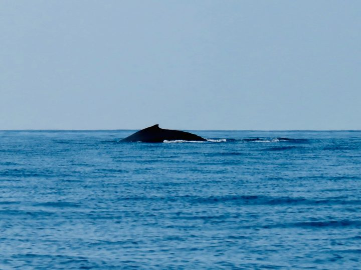 Humpback Whale spotting with tour in Puerto Escondido Mexico, Mexico Travel Blog Inspirations