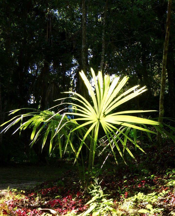 Palm Leaves in Tikal Guatemala, Guatemala Travel Blog