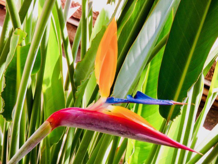 Paradise Flower Tips Lake Atitlán Guatemala, Guatemala Travel Blog