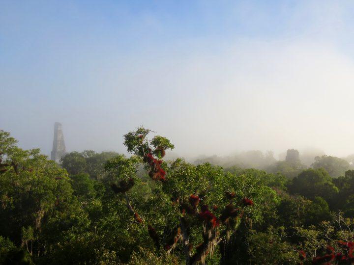 View Plaza 7 at the archaeological site Tikal Guatemala, Guatemala Travel Blog