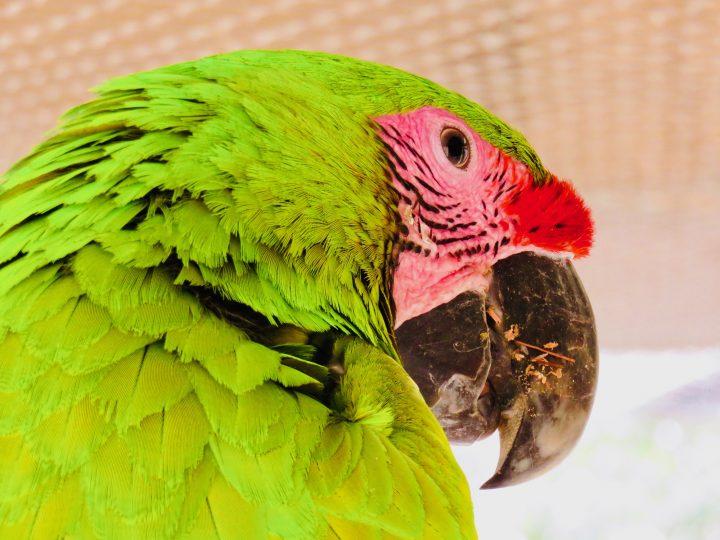 Bird Reserve Ara in Copán Ruinas Honduras, Honduras Travel Blog