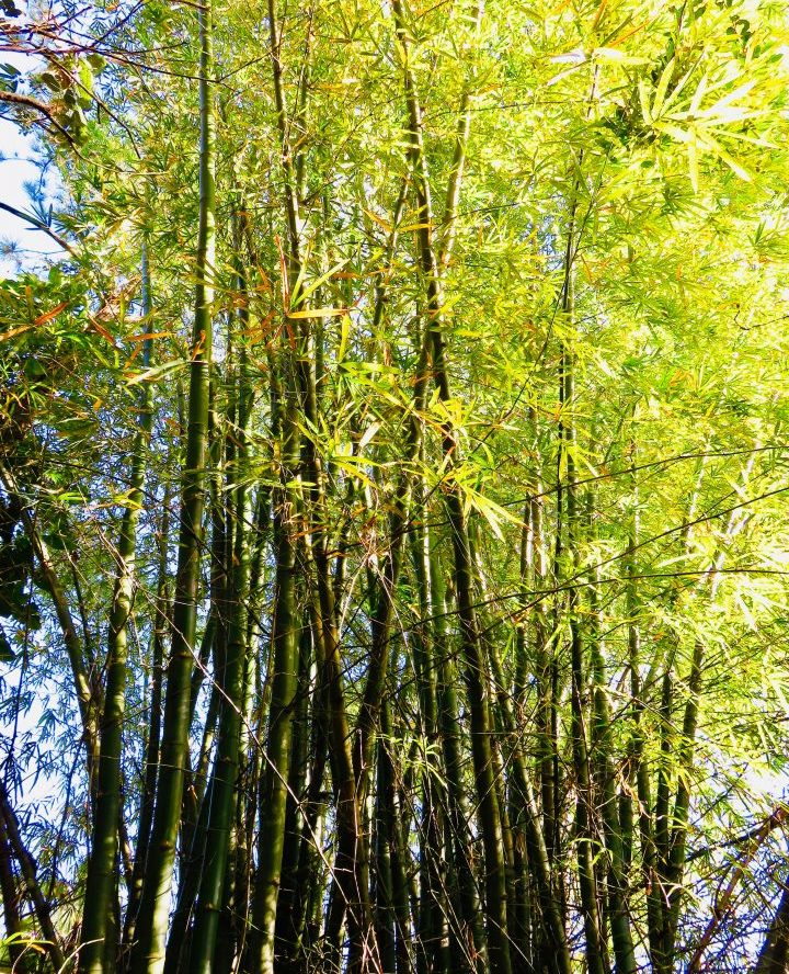 Bamboo at the Belize Zoo in Belize, Belize Travel Blog