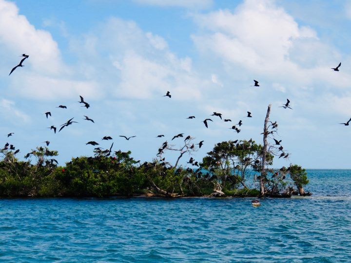 Visiting Birds Caye during Sailing tour Raggamuffin Belize, Belize Travel Blog