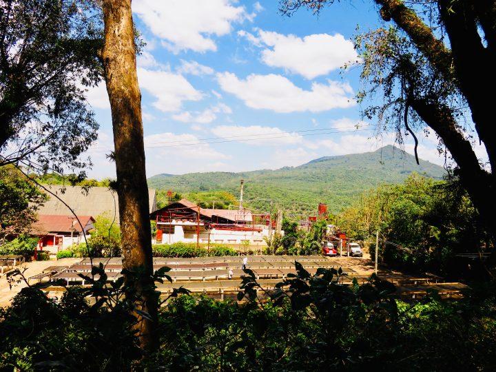 Coffee Farm El Carmen in Ataco on the Ruta de las Flores El Salvador, El Salvador Travel Blog