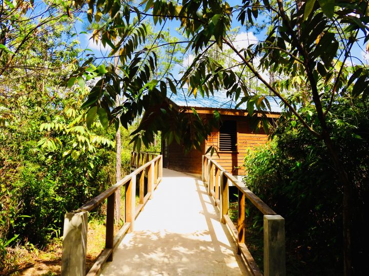 Accomodation Tropical Education Center Belize Zoo in Belize, Belize Travel Blog