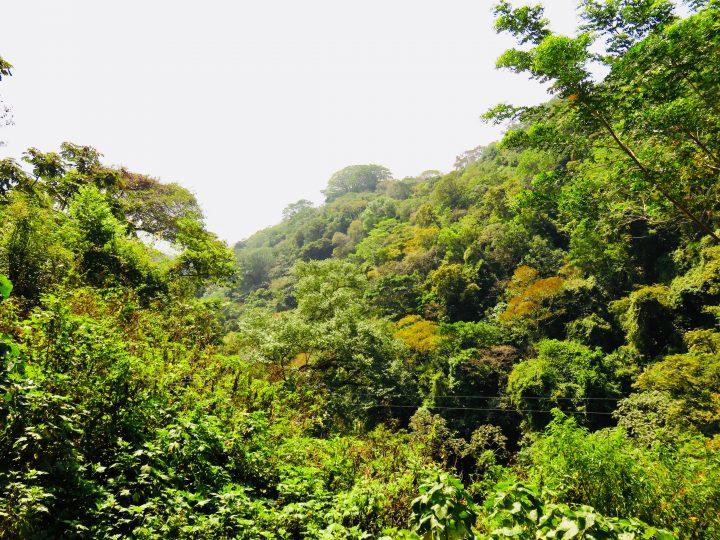 Walking the Jungle of Chorros on the Ruta de las Flores El Salvador, El Salvador Travel Blog