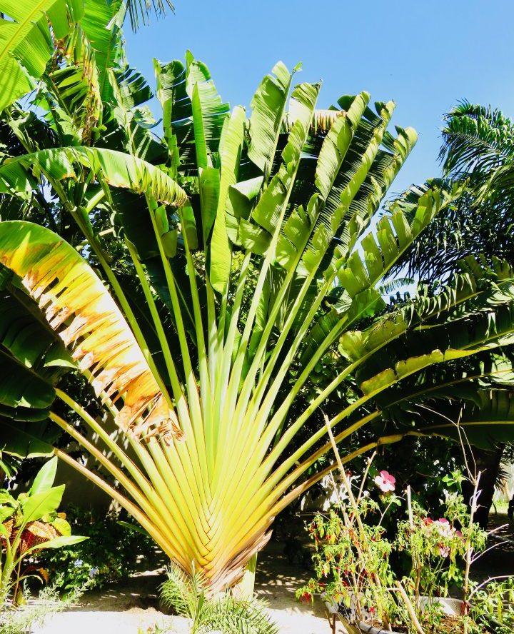Vegetation in Belize, Belize Travel Blog