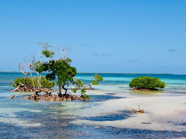 Visiting Ragga Caye during Sailing tour Raggamuffin Belize, Belize Travel Blog