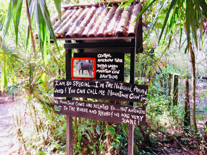 Signs and explanation at the Belize Zoo in Belize, Belize Travel Blog