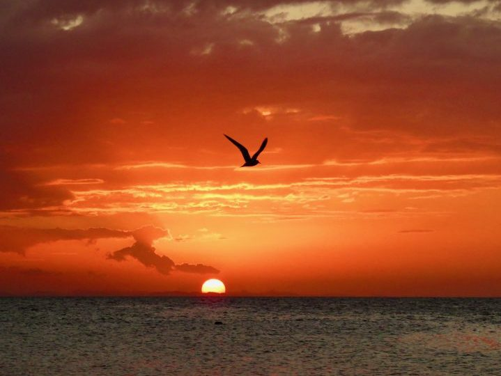 Sunset with bird during Sailing tour Raggamuffin Belize, Belize Travel Blog
