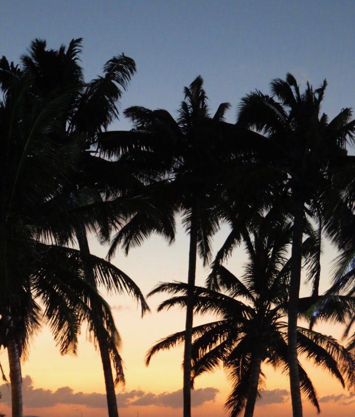 Sunset and Palms on Caye Caulker Belize, Belize Travel Blog