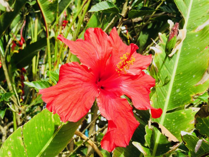 Refreshing drink: Hibiscus Agua de Jamaica Food Healthy Food recipes and inspirations