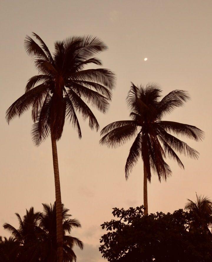 Palm Trees during sunset with the moon in El Zonte El Salvador, El Salvador Travel Blog