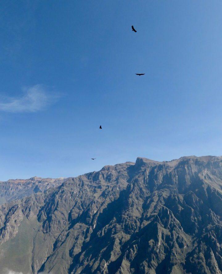Flying Condors at the Colca Canyon Arequipa Peru, Travel Blog Peru