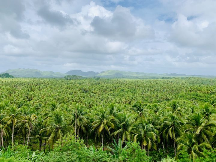Coconut Palm Valley Surfing Siargao Philippines Travel Blog