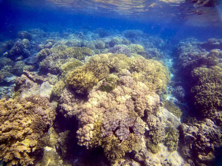 Coral Apo Siquijor Philippines Travel Blog