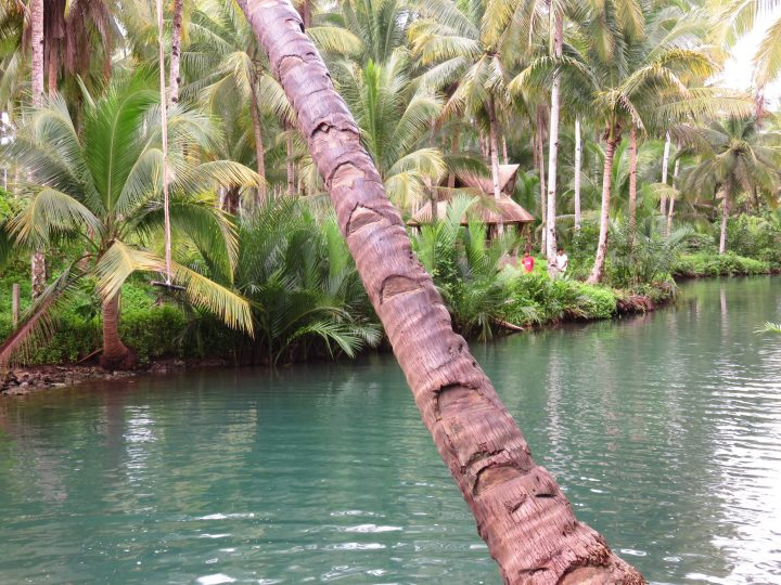 Jump in to the Maasin River with a rope, Surfing Siargao Philippines Travel Blog