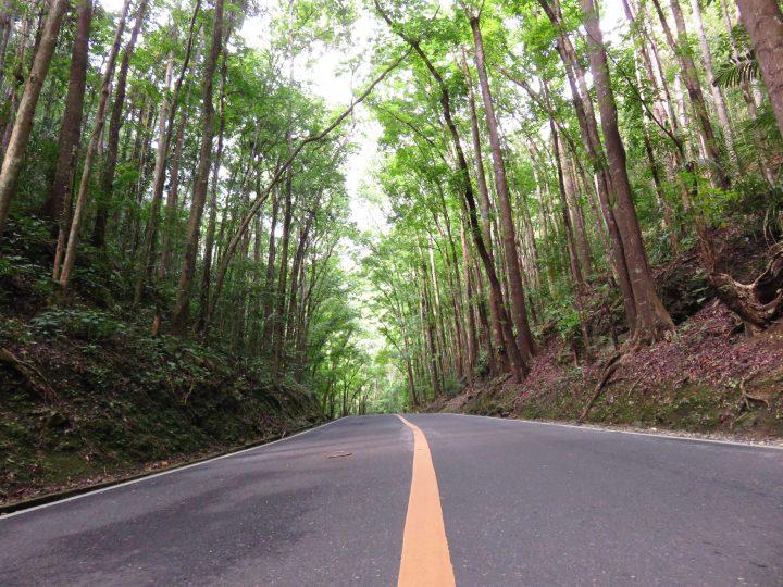 Man Made Forest Bohol Philippines Travel Blog