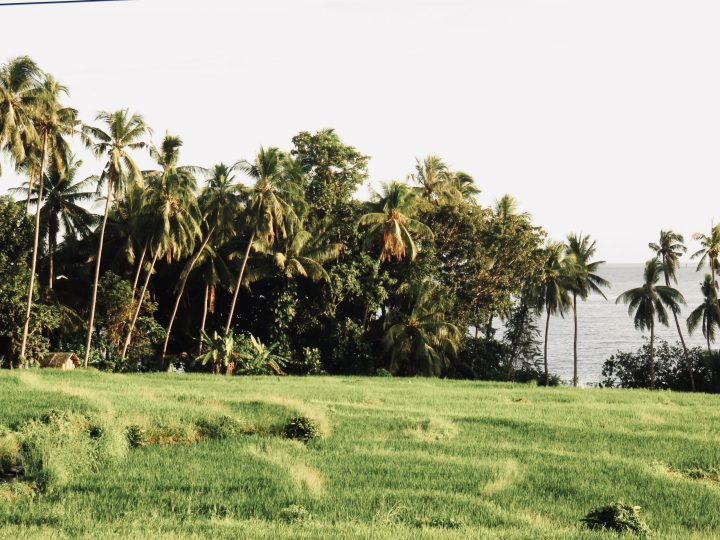 Rice Fields Bohol Philippines Travel Blog