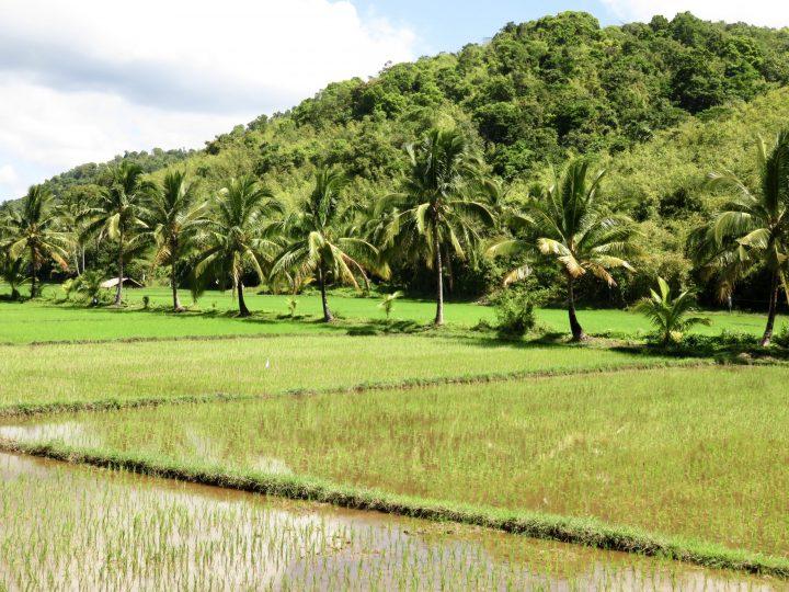 Landscape tour rice fields Coron Palawan Philippines Travel Blog