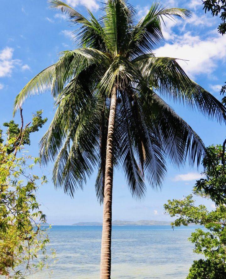 Palmtree Palatpat Beach Coron Palawan Philippines Travel Blog