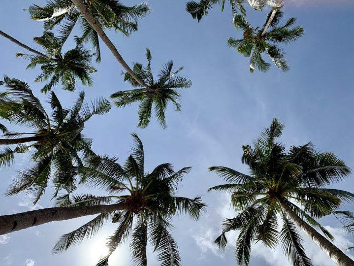 Palms Blue sky El Nido Palawan Philippines Travel Blog