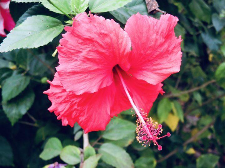 Hibiscus Route Philippines Travel Blog
