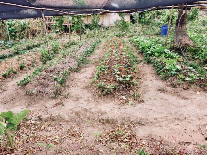 TAO Farm TAO Experience Philippines Travel Blog