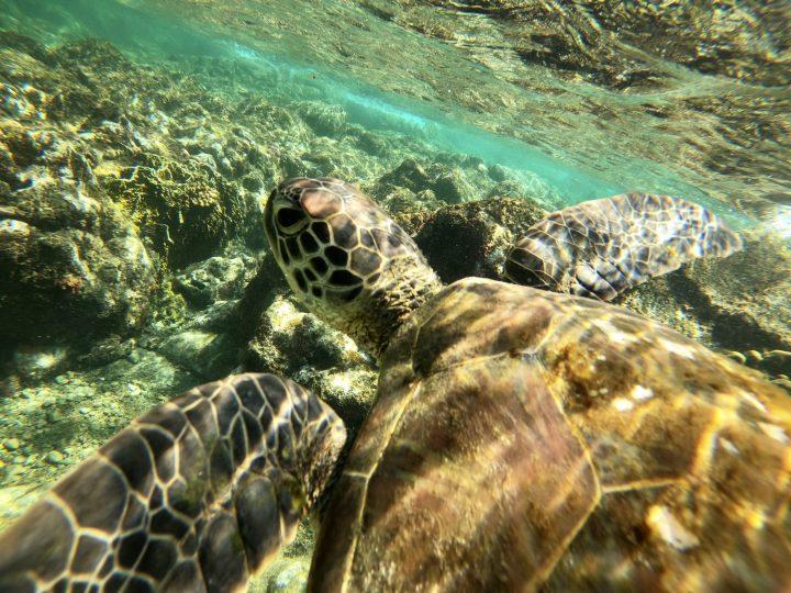 Turtle Apo Island Route Philippines Travel Blog