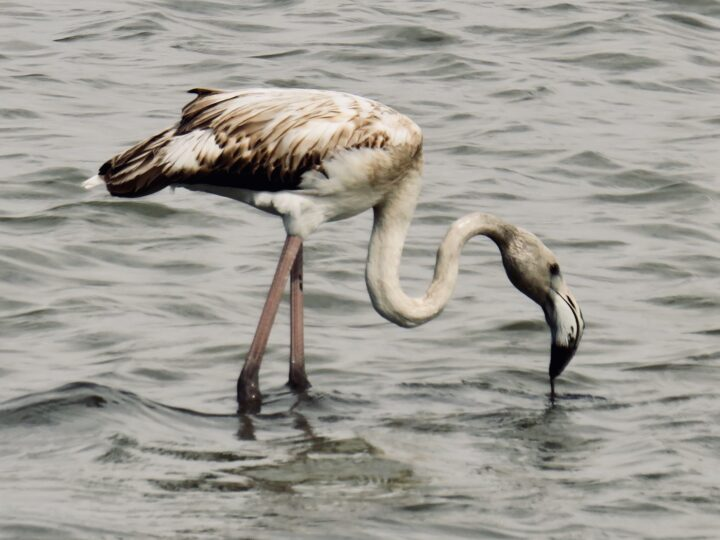 Flamingo Salt Fields Saline di Trapani West Sicily Italy Travel Blog